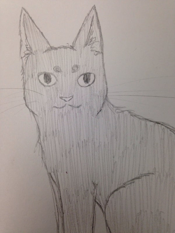 Drawing a Simple Cat