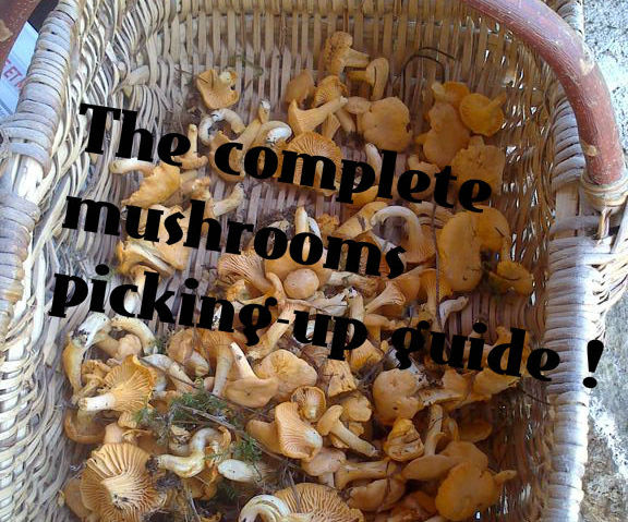 The complete mushrooms picking-up guide