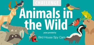 Animals in the Wild Challenge