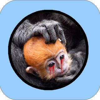Patch monkey 02.png