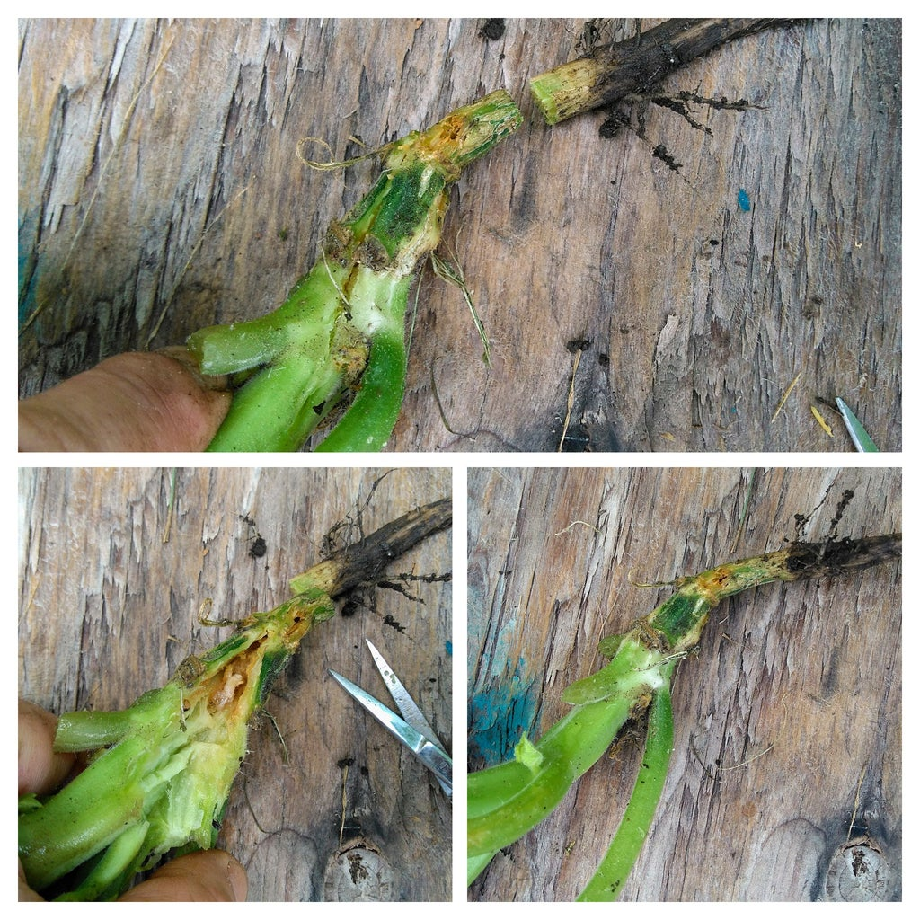 Dissecting a Stem