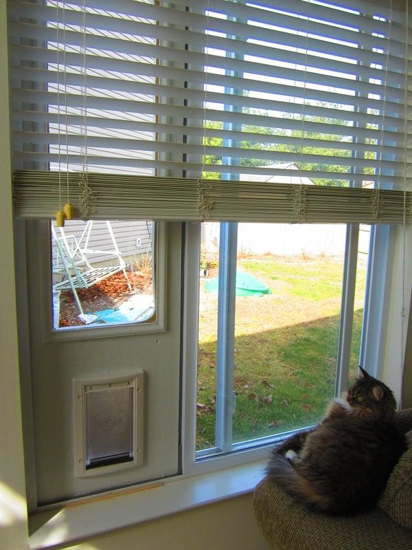 Temporary Cat Door