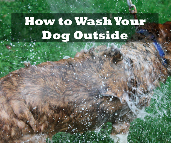 How to Wash Your Dog Outside
