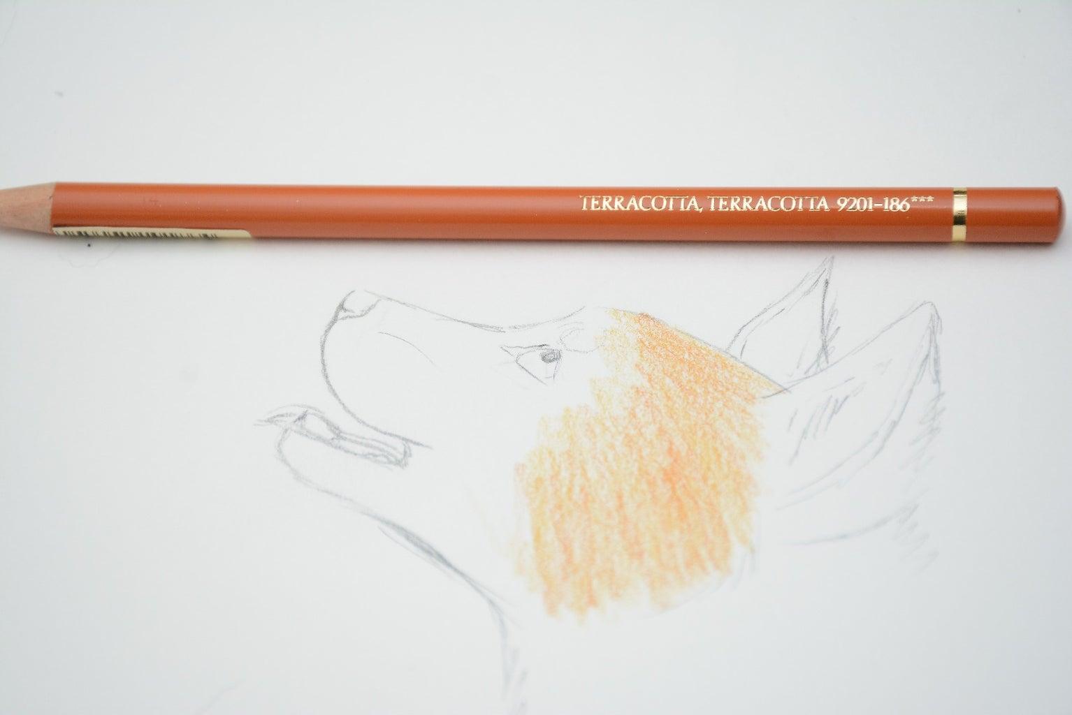 Orange Fur (short)