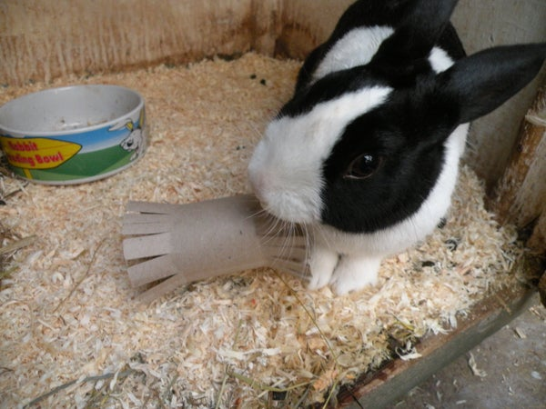 Rabbit Toys - Homemade Rabbit Toy 1