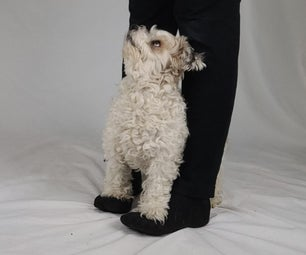 Dog Trick: Teach Your Dog to Walk on Your Feet