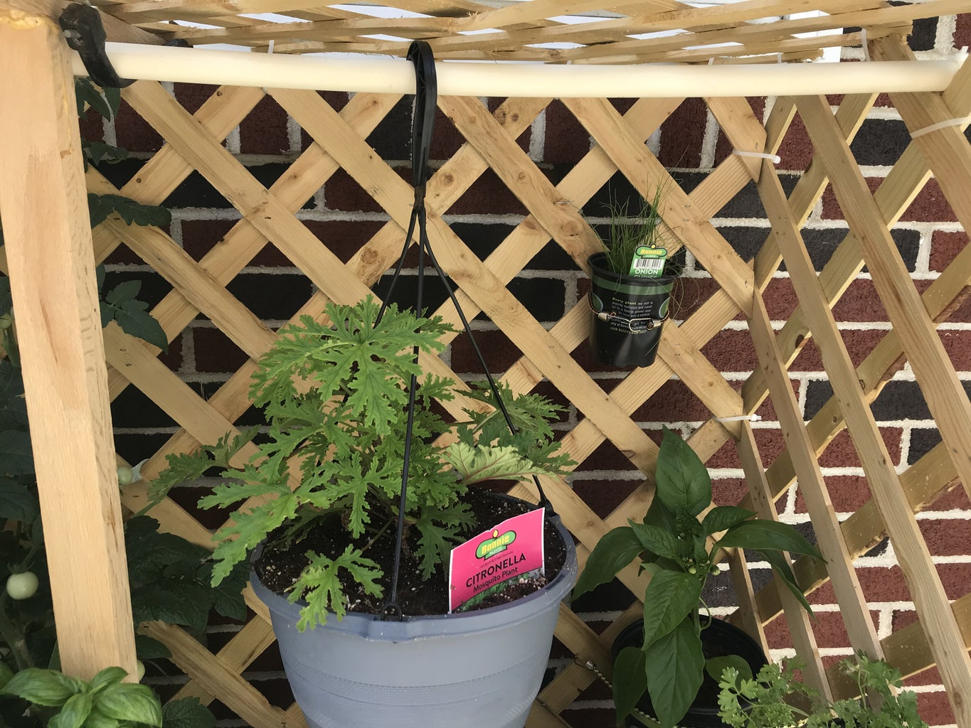 Add a Rod to Hang Plants From