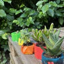 Colorful Plant Pots Made From Recycled Plastic