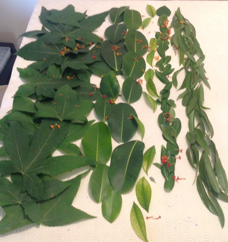 Get Leaves