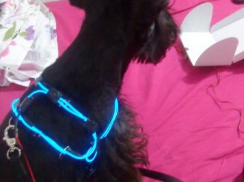 Fluorescent Dog Collar (TRON'S DOG)