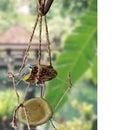 Bird Feeder: Offer Cosiness to Birds