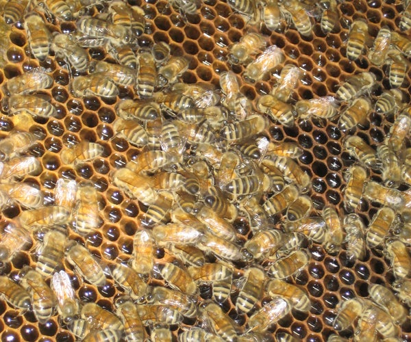 Harvest and Extract Honey