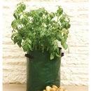 How to Grow Seed Potatoes in a Potato Bag.