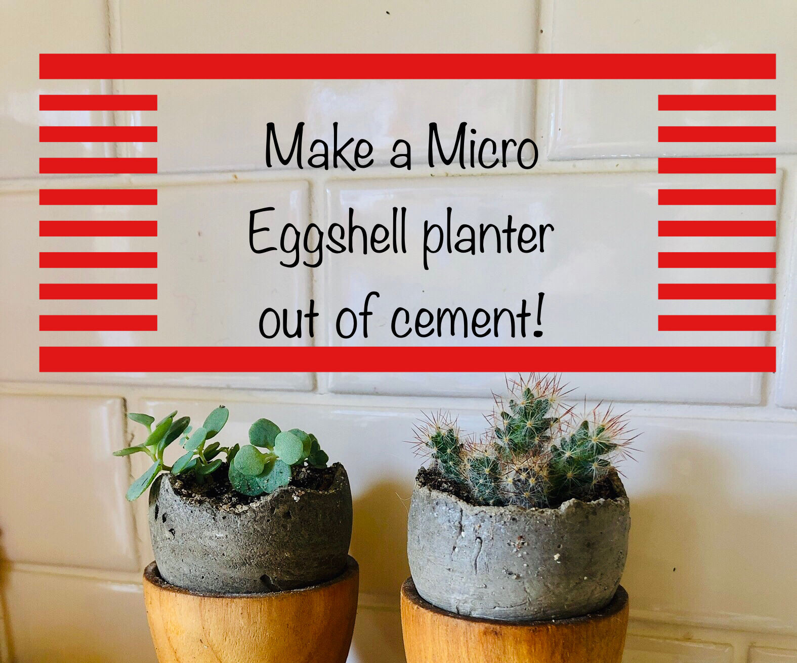 Make a Micro Cement Egg Shell Planters for Wee Succulent Plants!