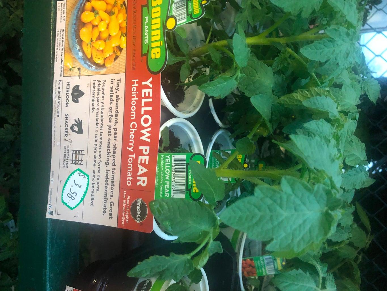 Choose the Plants.