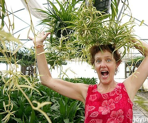 Spider Plants: Easy Care & Durable As Can Be