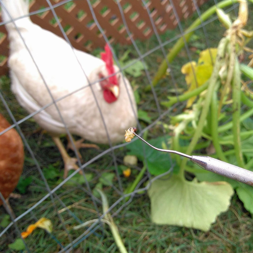 Partnering With Chickens
