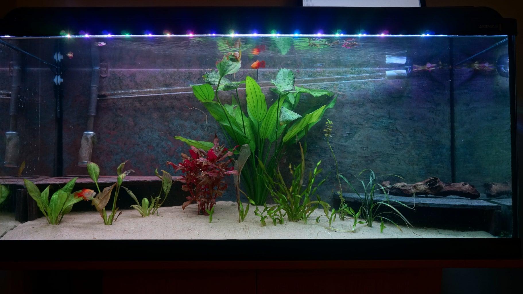 RGB Aquarium Lights With Sunsets and Sunrises