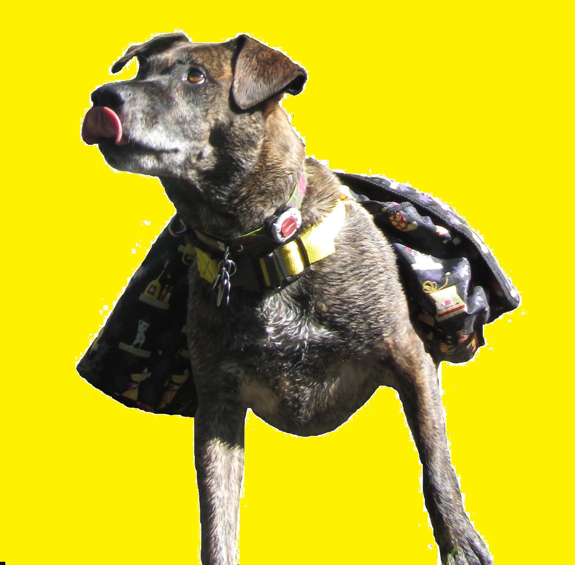 $10 Dog Backpack