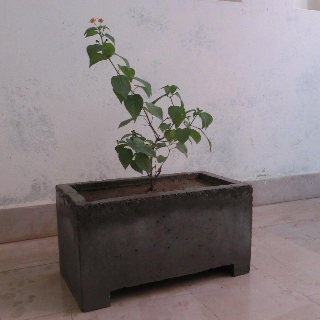 Enjoy Your Planter