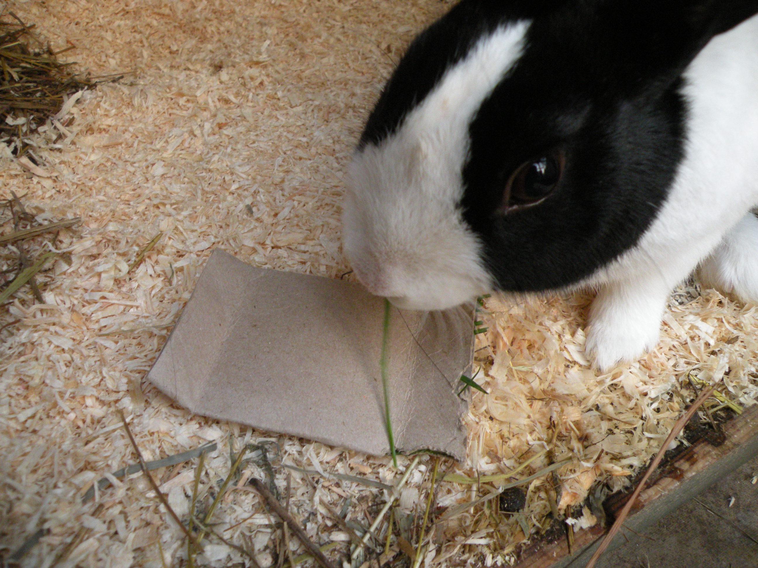 Rabbit Toys - Homemade Rabbit Toy 2