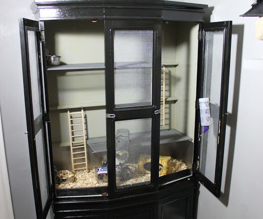 Rat Cabinet From a Dinning Room Hutch