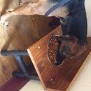 Plato elevado para perros y ratones controladores