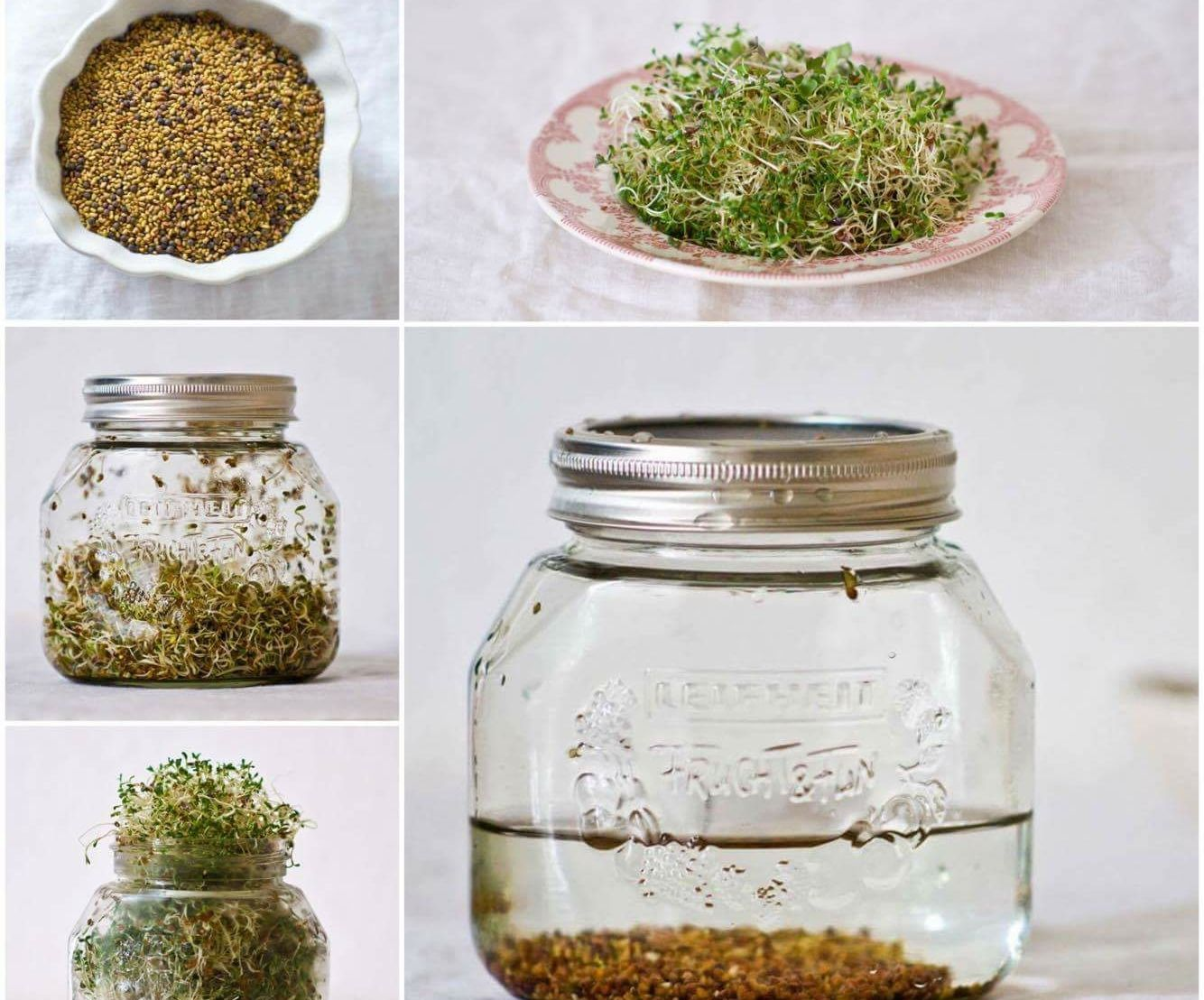 Ultimate Step by Step Sprouting Guide