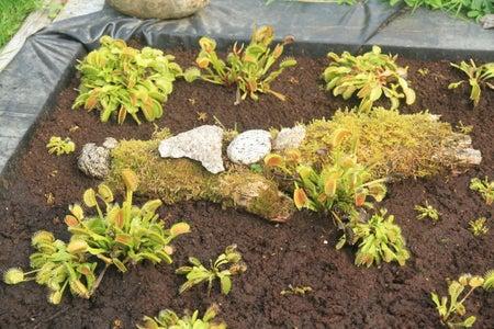 Artificial Peat Bog for Carnivorous Plants