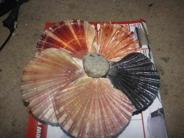 Fan Clam Shell Flower!