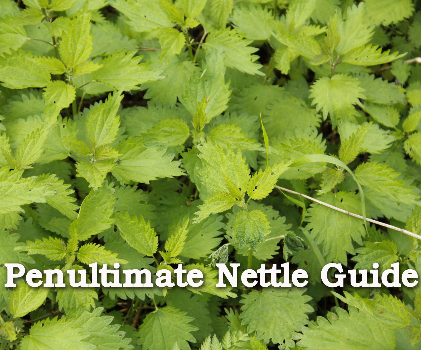 The Penultimate Nettle Guide