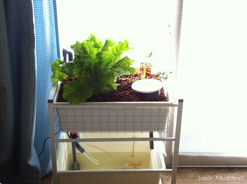 Indoor Mini Aquaponics System (IKEA-hack)