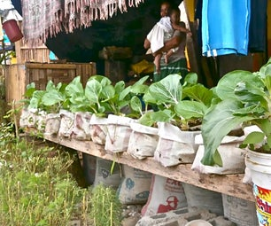 Sack Gardening, an Anti-desertification Tool