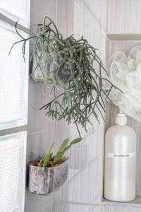 Botanical Shower Buddy