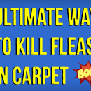 How to Kill Fleas in Carpet Naturally