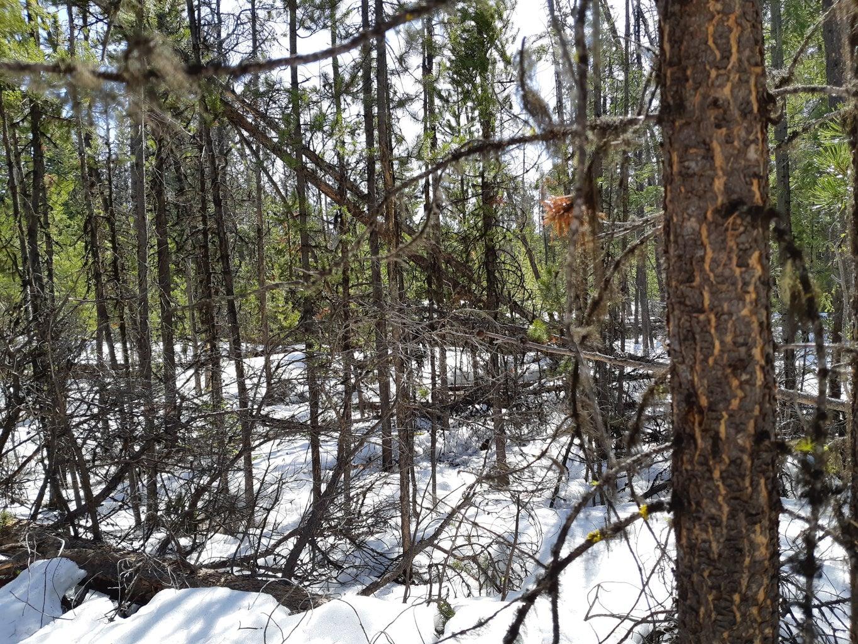 Find a Stick