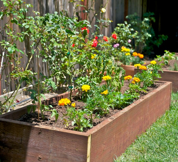 Grow Vegetables in Your Backyard
