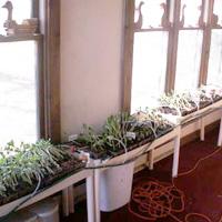 Auto-Watering Plant Nursery