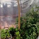DIY Rooftop Urban Greenhouse