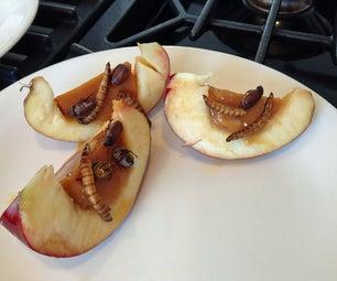 Salty Bug, Caramel Stuffed Apples