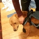 DIY Dog Mobility Harness for under $15