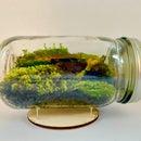 How to Build a Mason Jar Terrarium