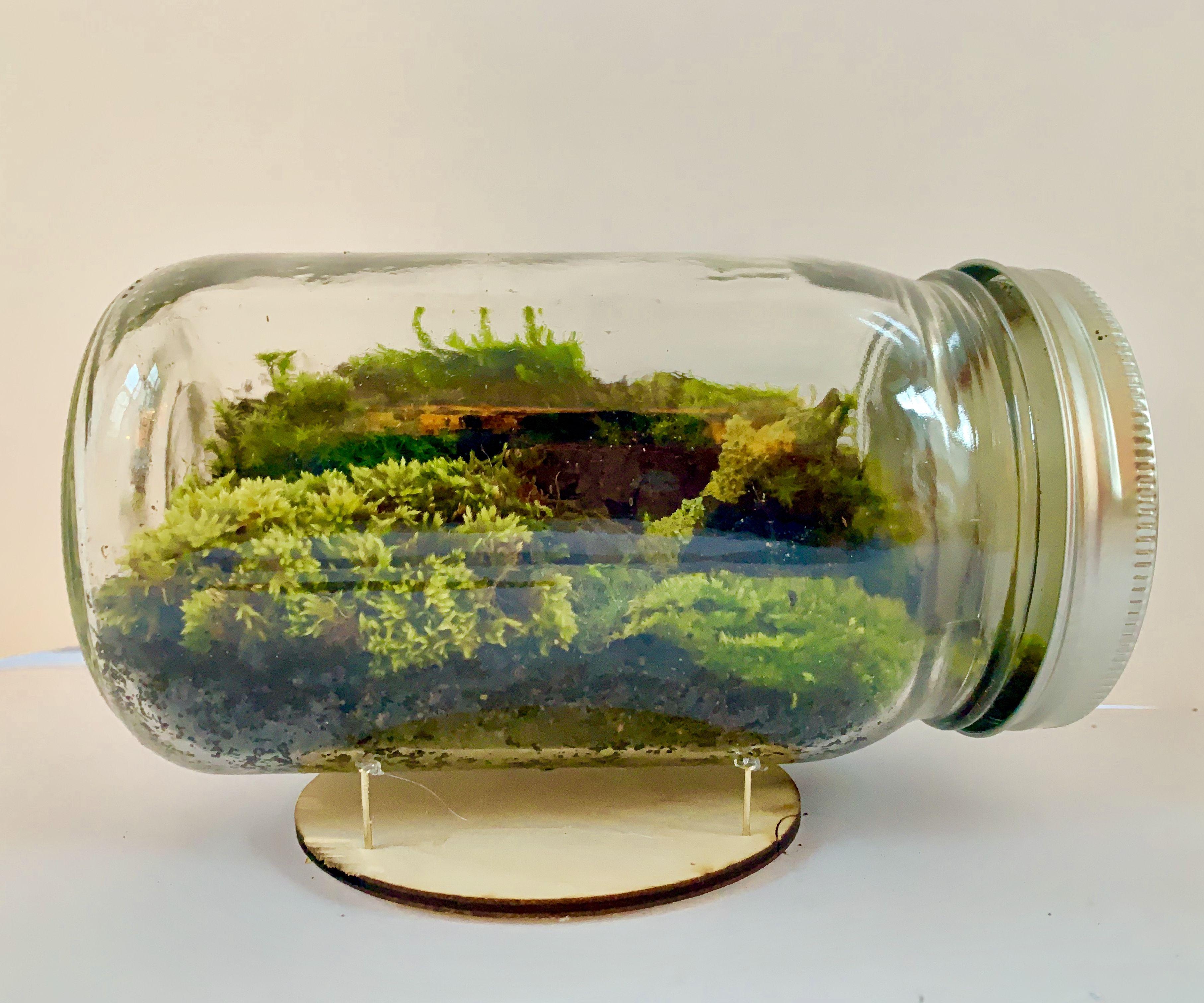 How To Build A Mason Jar Terrarium 7 Steps Instructables