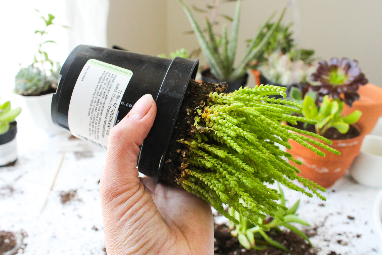 How to Remove Plants From a Plastic Pot