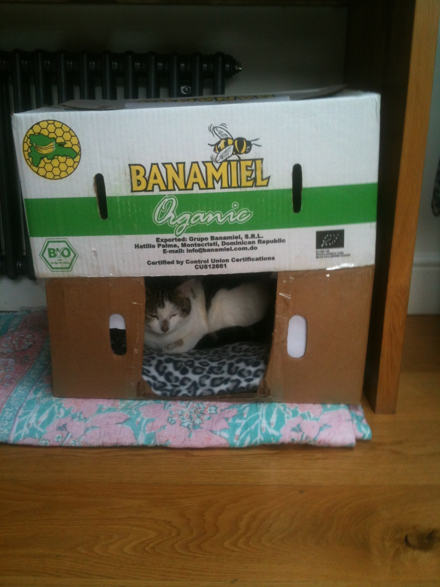 How To Make A Cat House