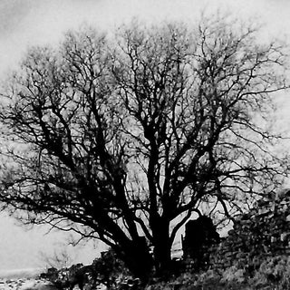 Grey tree.jpg
