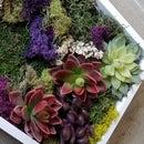 Moss Art: the Anti-Garden