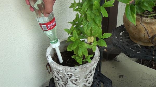 Turn a Glass Coke Bottle in to a Plant Waterer