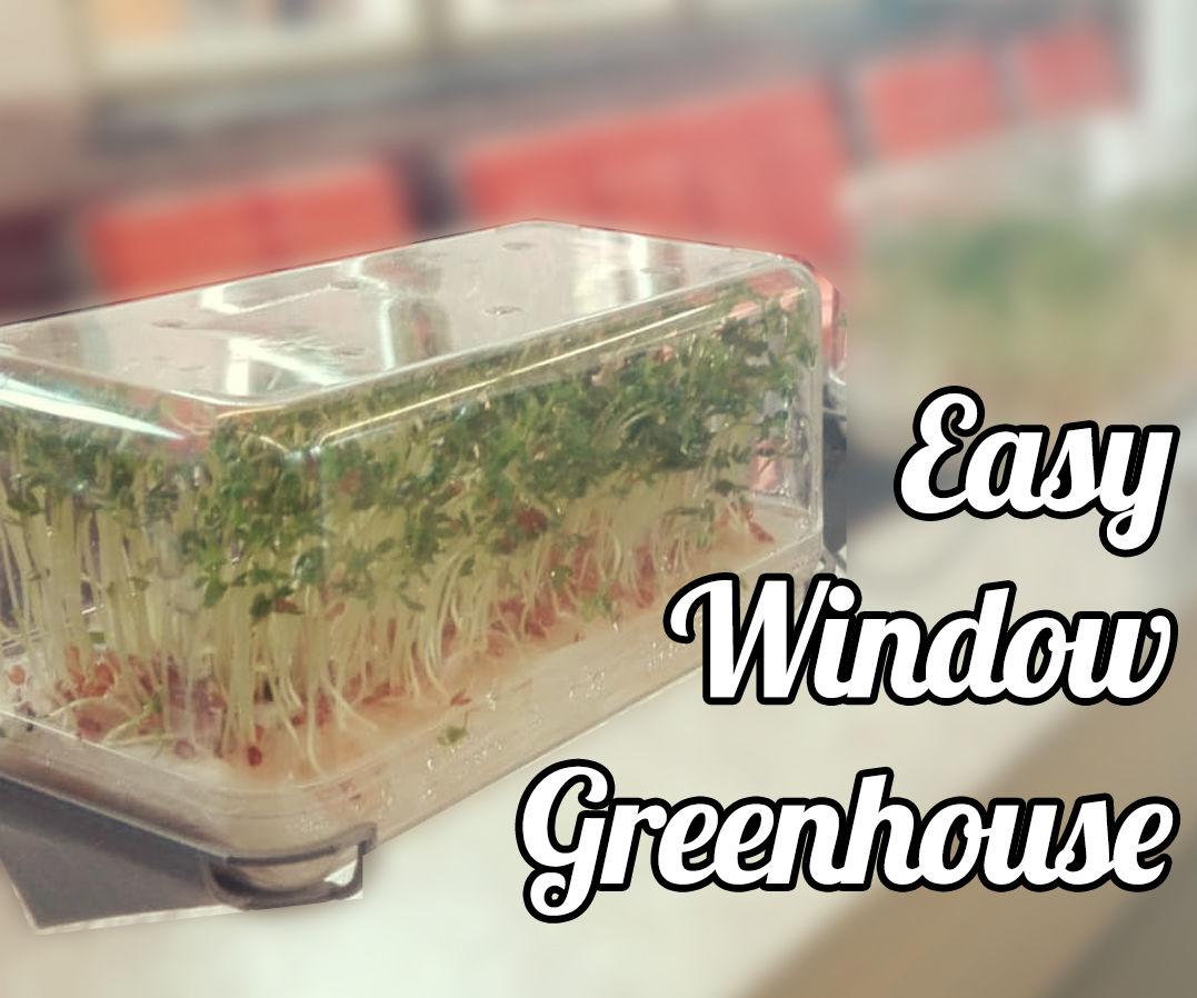 Window Grasshouse