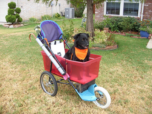 Awesome dog stroller made from a used jogging stroller